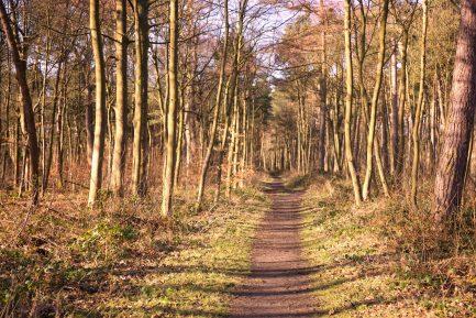 Exploring the Dalmeny woodlands