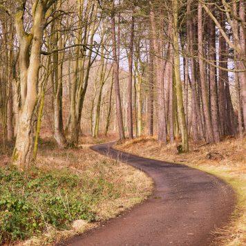Woodlands along the shore walk of Dalmeny Estate