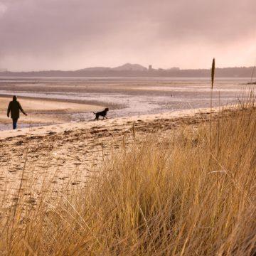 Forth shoreline